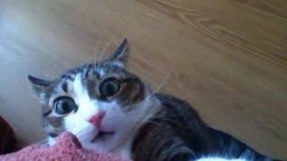 Kočkompilace - to nej z koček pro dnešní den