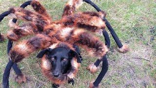 Obří pso-pavouko mutant