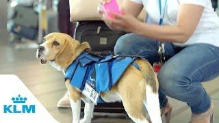 Ztráty a nálezy na Amsterdamském letišti vyřizuje pes