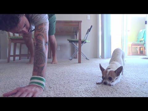 Pes s páníčkem cvičí jógu
