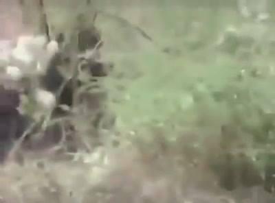 Opice na praseti do toho dupou co to jde