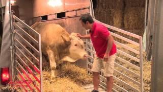 Mají zvířata city?