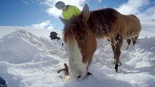 Záchrana zapadlého koně v Chile