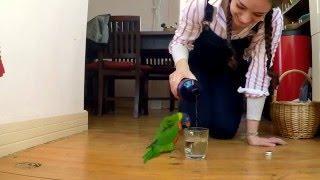 Radujte se z maličkostí - papoušek tančí za zvuku tekoucí vody